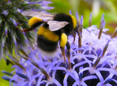We Need to Talk About Bees: Neal's Yard Remedies thumbnail